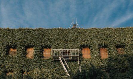 Dům, který spadá do stylu zvaného ekoarchitektura.