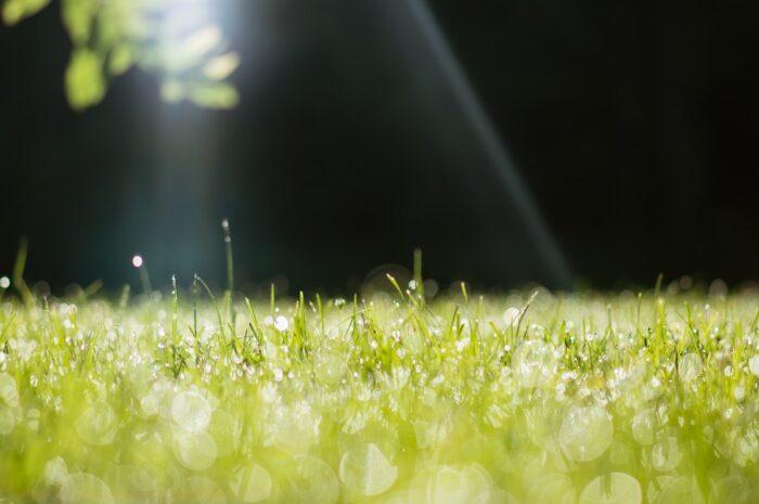 Krásně zelený trávník s ranní rosou.